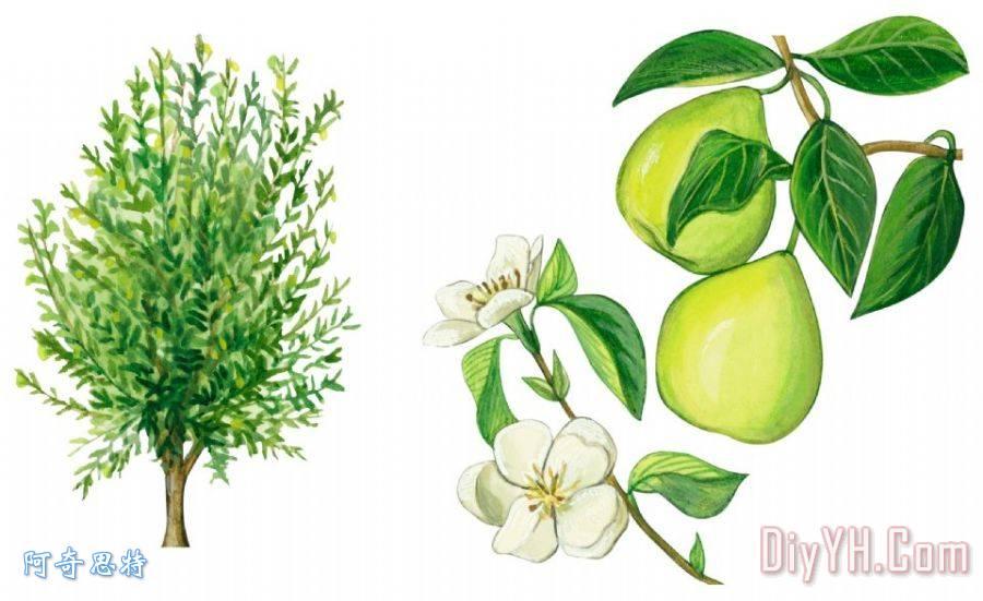 木瓜树装饰画_花卉_人物_树枝_绿色_开花_水果_木瓜树