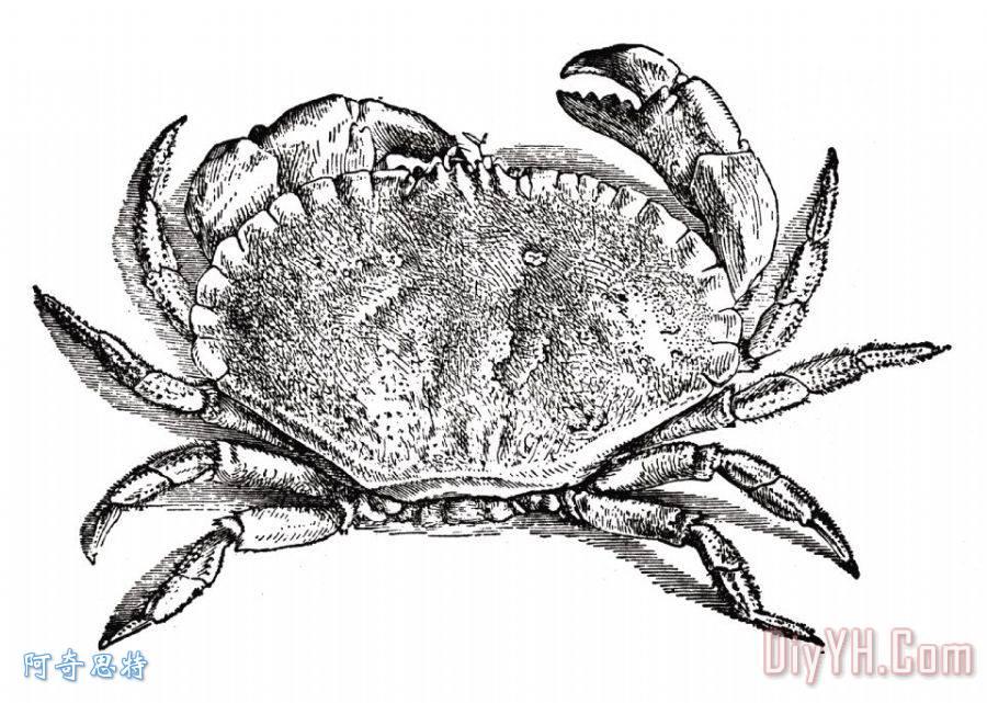 螃蟹装饰画_水_海军的_雕刻艺术_甲壳动物_螃蟹油画