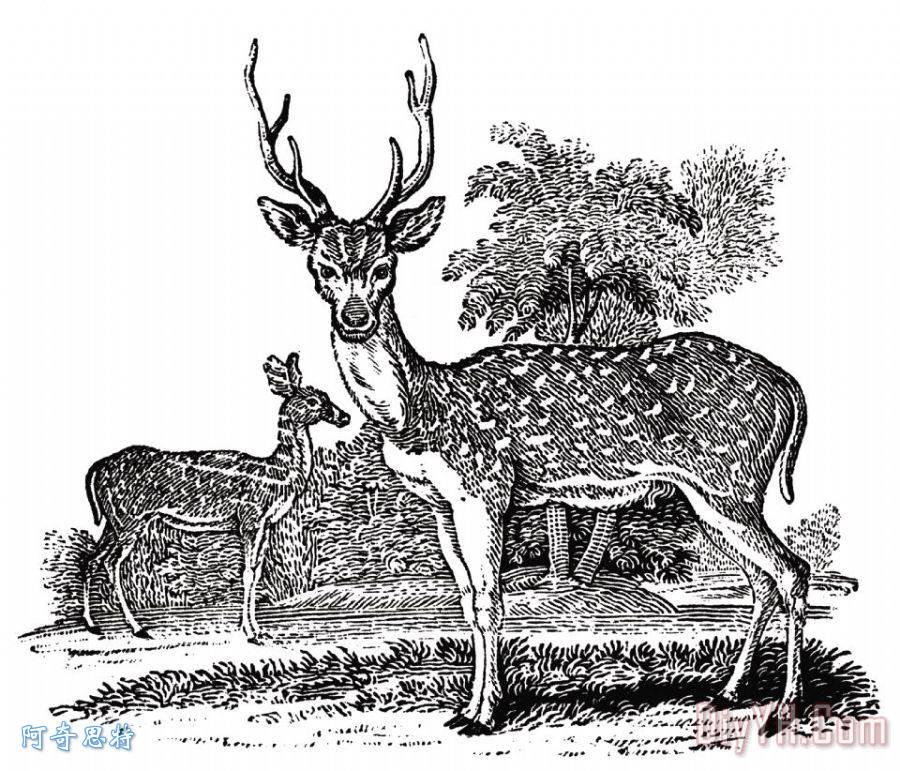 鹿- 鹿装饰画