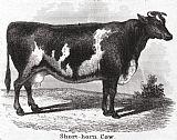 牛, 19世纪装饰画