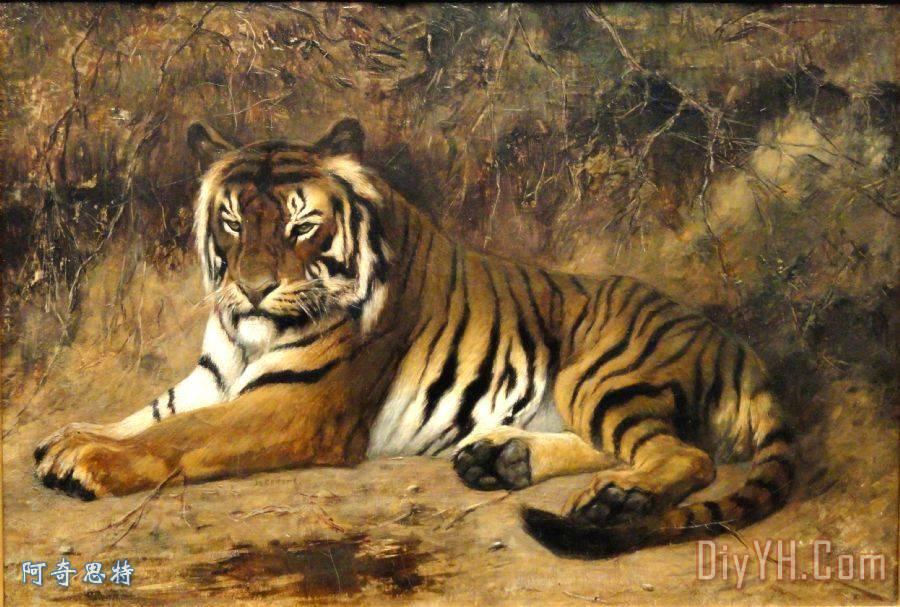 动物的种类和特征老虎