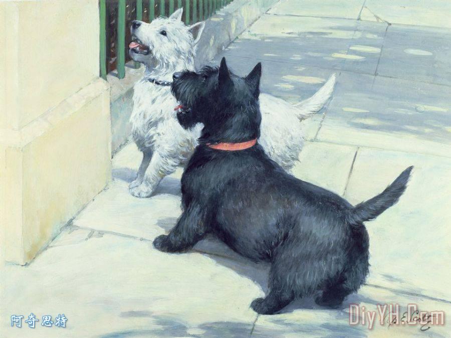 黑与白犬装饰画 动物 一副 狗 黑的 娇小可爱的 黑与白犬油画定制 阿奇