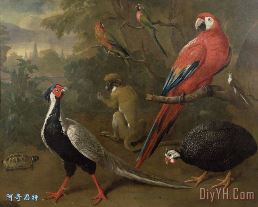 野鸡金刚鹦鹉猴子和乌龟装饰画
