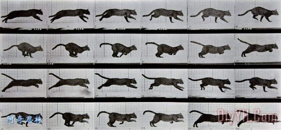 动物奔跑flash素材