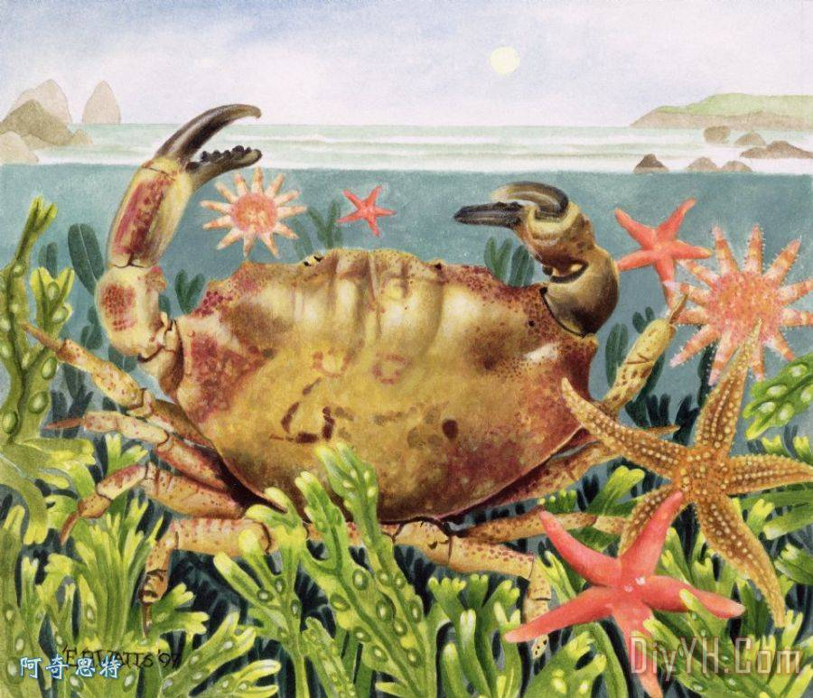 紧锁蟹水下海星装饰画