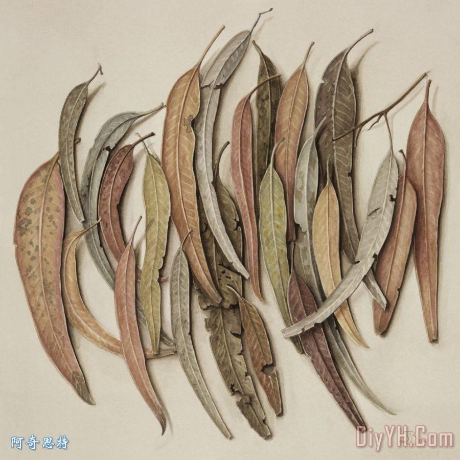 桉树叶 - 桉树叶装饰画