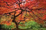 波特兰日本花园装饰画