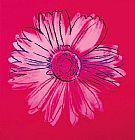 深红色 - 菊花C 1982深红和粉红色