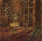 - 秋天在树林