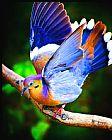 羽毛和花式装饰画