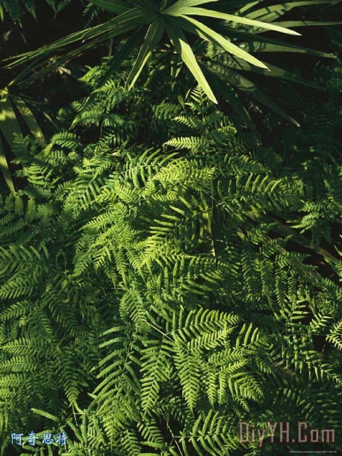 树叶画边-棕榈 蕨叶 植物 装饰画