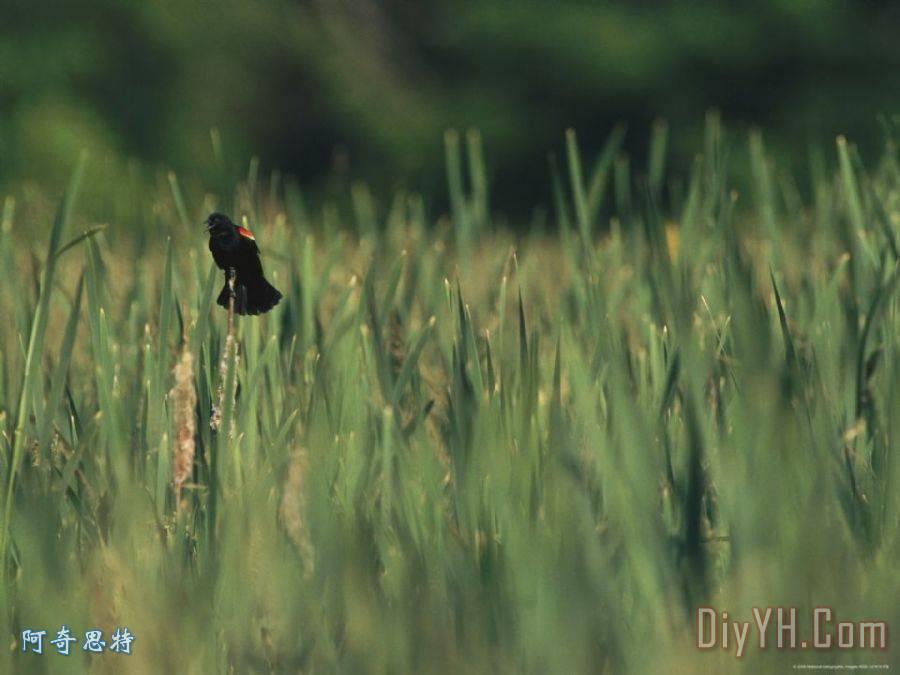 小黑鸟动态风景壁纸