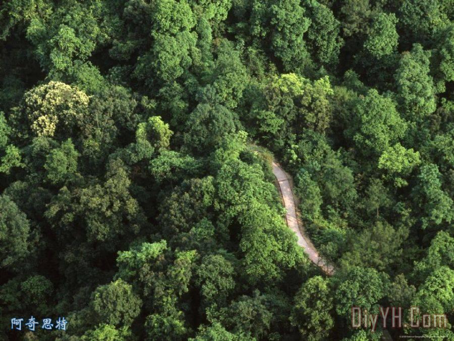 一个鸟瞰的路穿越茂密的森林