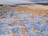 在一个冬日宾夕法尼亚州风景玉米留茬装饰画