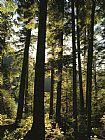 枞树塔在西北森林装饰画