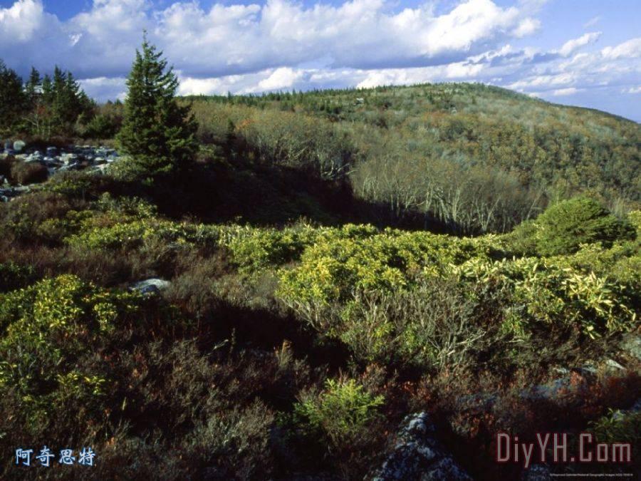 山劳雷尔和浆果灌木丛中熊岩自然保护区装饰画