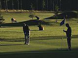 两个人玩高尔夫虽然麋鹿吃草的高尔夫球场装饰画