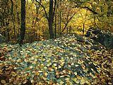 秋天的树叶在岩石中的阿帕拉契小径森林装饰画