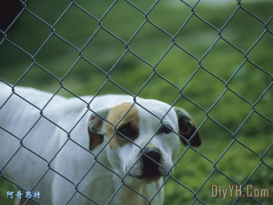 宠物狗一个勾花网的背后装饰画_动物_宠物狗一个勾花