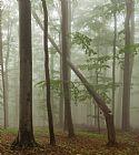 老山毛榉森林装饰画