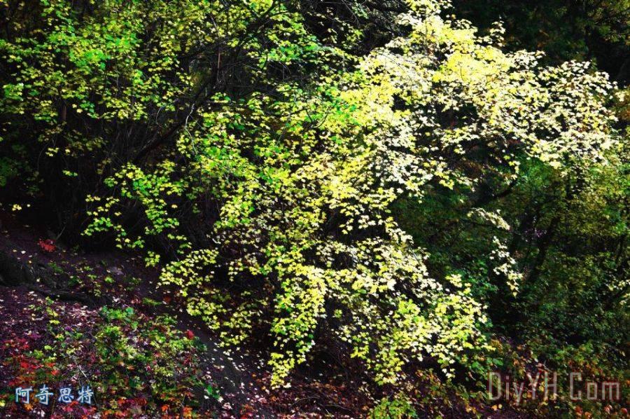 秋天树叶粘贴画 大树