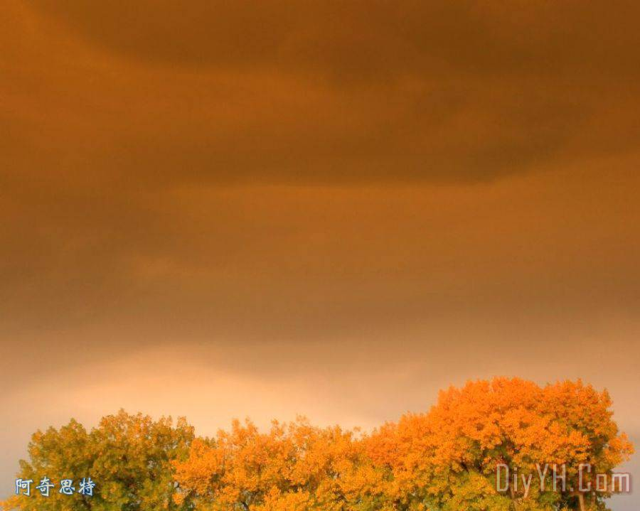 在一个秋天的天空装饰画_风景_秋天的叶子_发光_在一