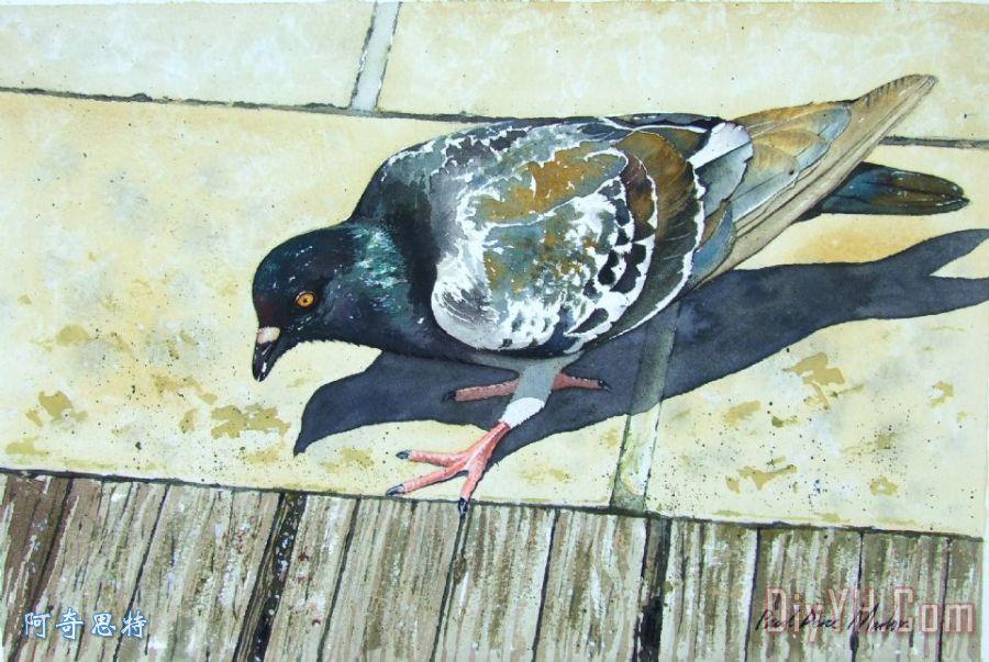 寻找面包屑装饰画_动物_鸽子_野生的鸟兽等_寻找面包