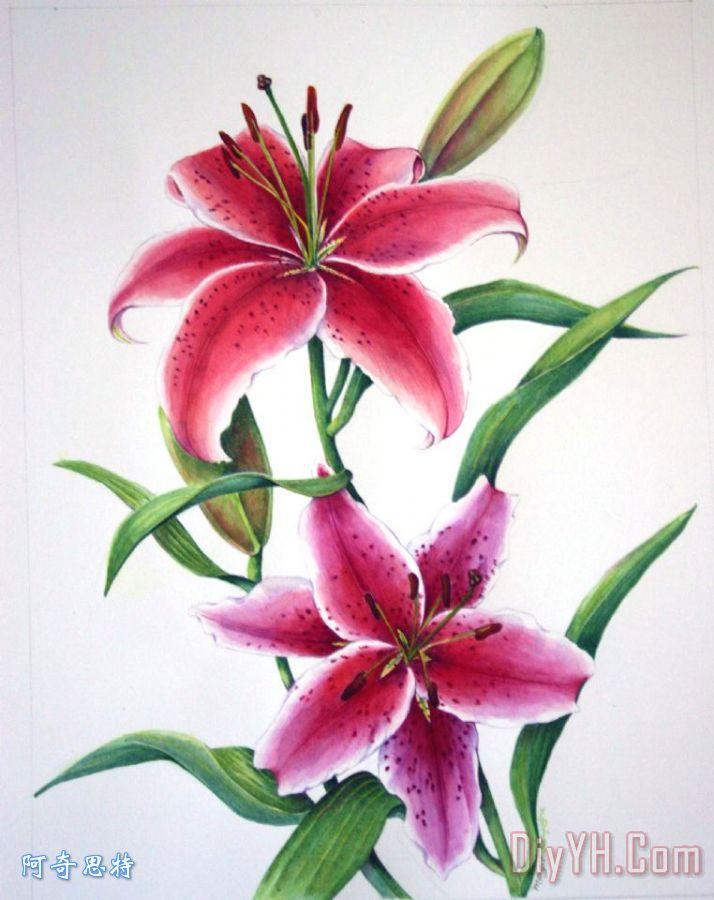 手机壁纸植物花卉 百合