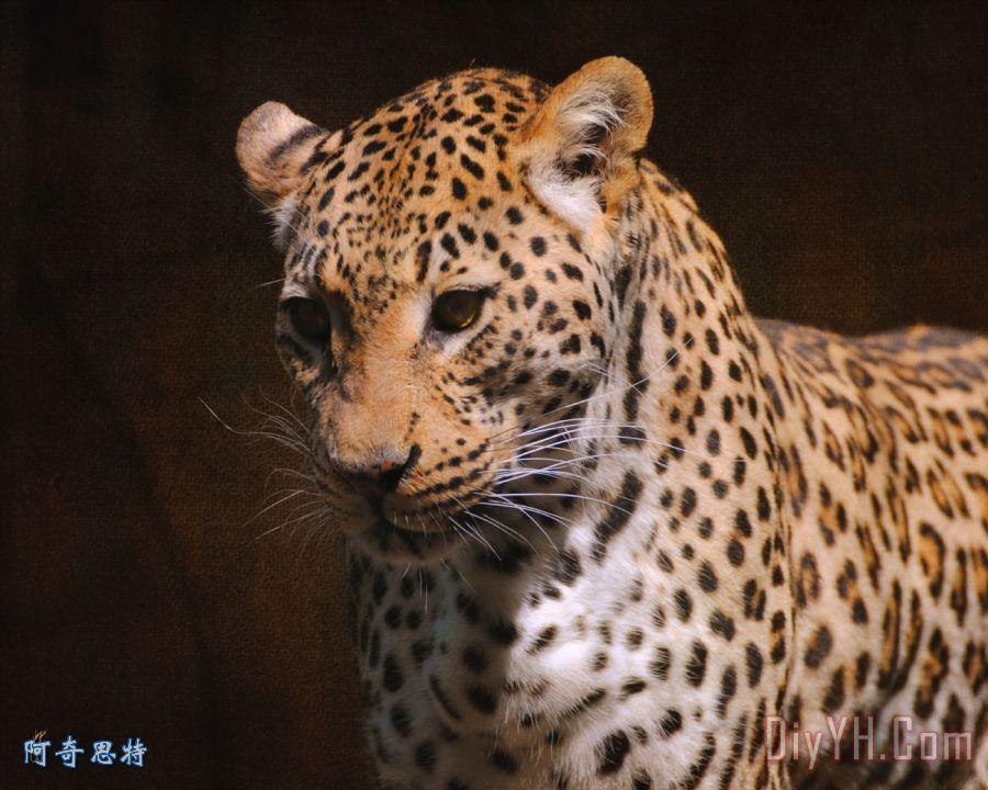动物_大型猫科动物