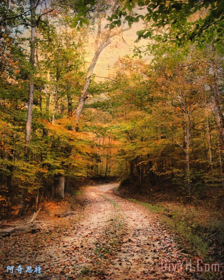 大自然的和谐装饰画_风景_秋天_金色的_秋天的景色