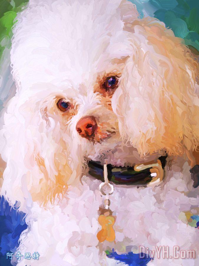 白色的贵宾犬装饰画_动物