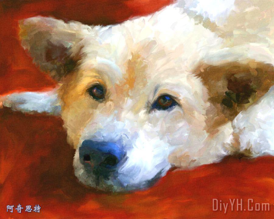 白色牧羊犬肖像装饰画