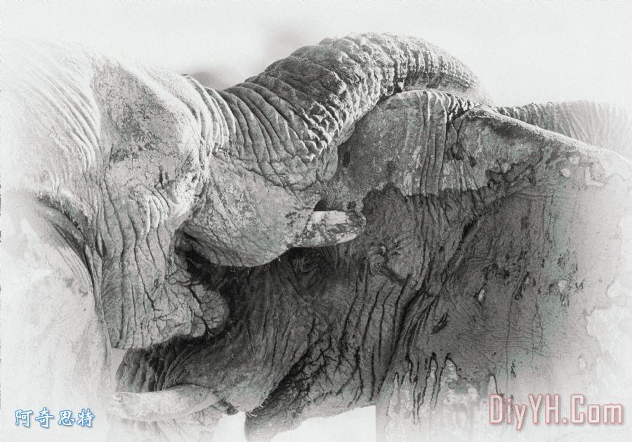 在黑色和白色大象打架装饰画