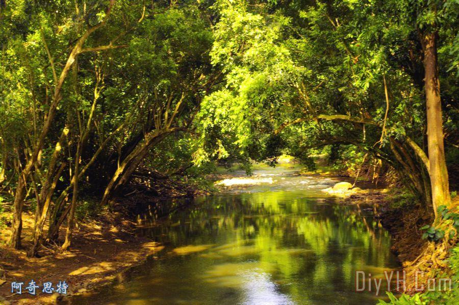 丛林流下面的秘密装饰画_风景_树木_小河_球手_红色的