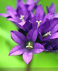 - 紫花开
