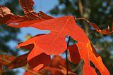 秋季注意事项装饰画