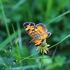 蝴蝶在广场装饰画