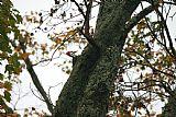 啄木鸟装饰画