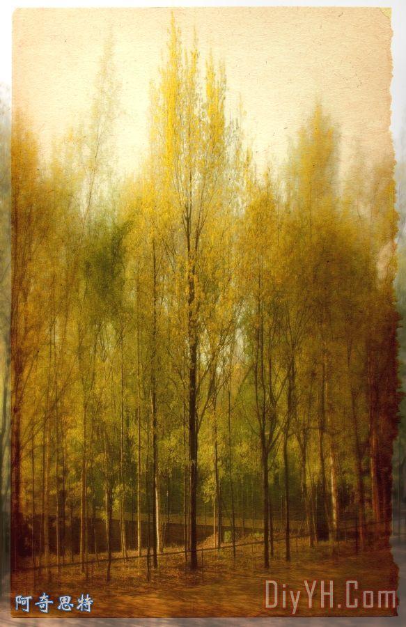 树装饰画_树枝_国家_灌木丛_美丽的_树油画定制
