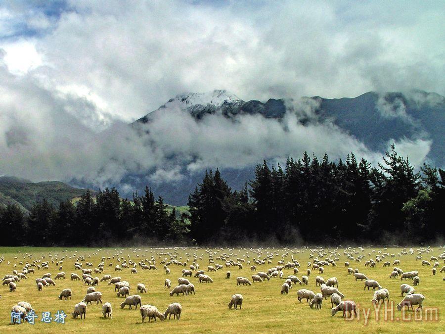 一名新西兰景观装饰画_风景_动物_村庄_田园的,乡下的