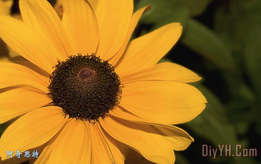 大自然艺术黄色装饰画_风景_花卉_夏天_橙色的_大自然