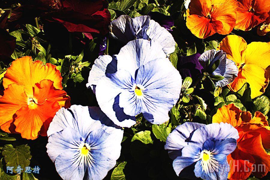 在颜色自然装饰画_风景_花卉_鲜艳的_在颜色自然油画