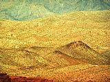 沙漠荣耀装饰画