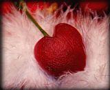 - 樱桃心脏
