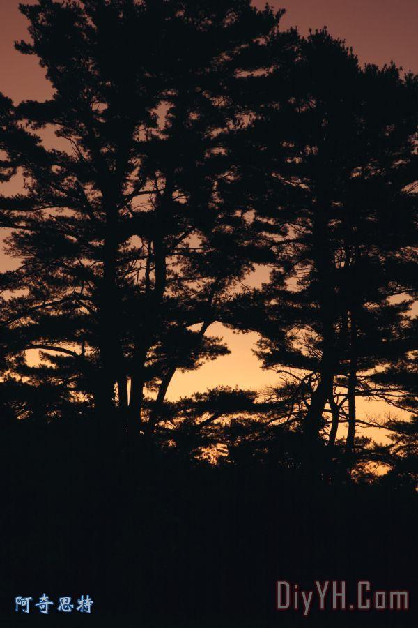 森林的剪影 - 森林的剪影装饰画图片
