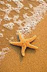 - 海星在海滩上