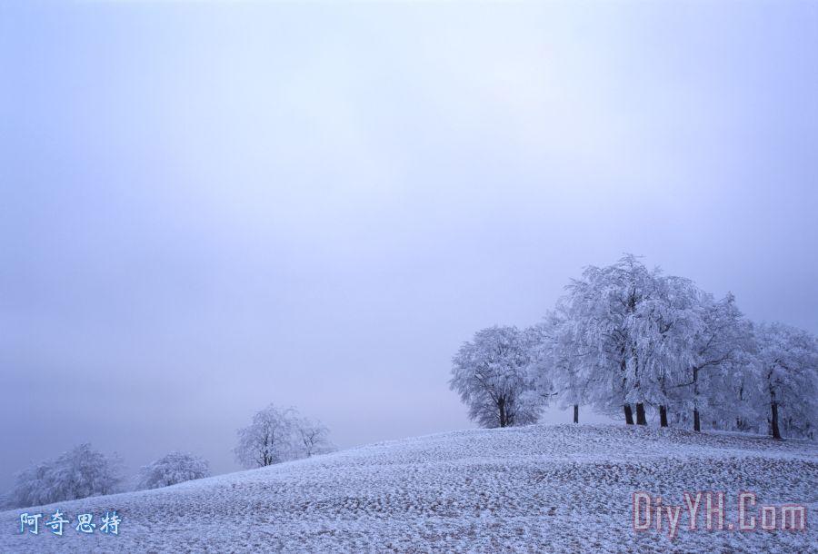 冷若冰霜的树木装饰画