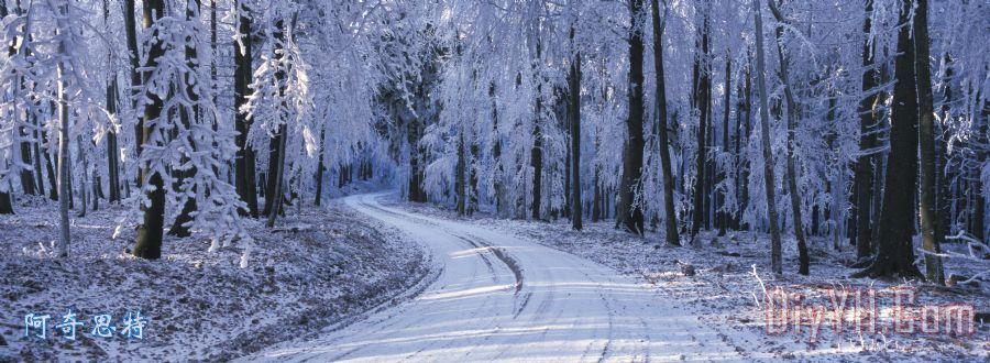 通过冬季森林路装饰画