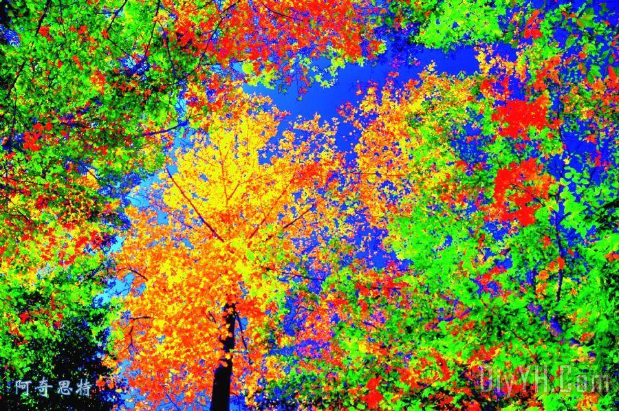 秋天的颜色 - 秋天的颜色装饰画