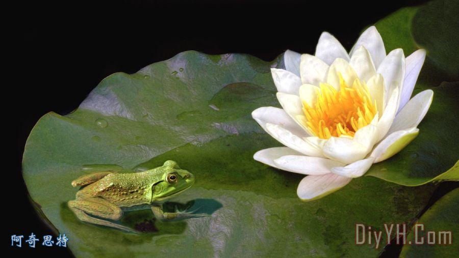 个百合装饰画 池塘 自然 荷花 青蛙 考虑一个百合油画定制 阿奇思特